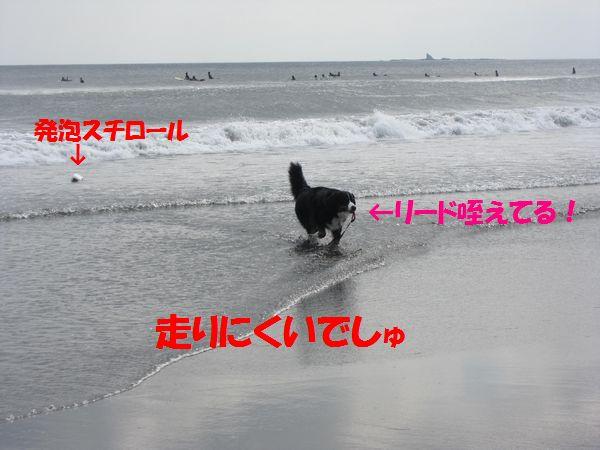 a0108146_1563587.jpg