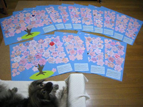 桜プロジェクト  〜ラストスパート〜_a0119263_1647484.jpg