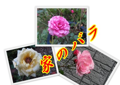 b0149071_959160.jpg