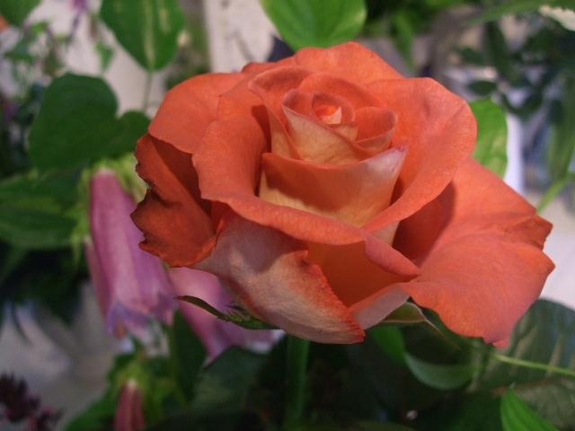 オークリーフ花の教室(バラを使ってレッスン)_f0049672_18144193.jpg