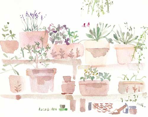 6月の庭 7_d0115092_6384697.jpg