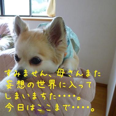 b0138430_15541941.jpg