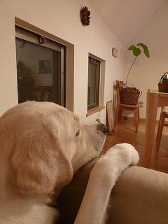 with dog   いつものひととき♪_a0165160_6141865.jpg