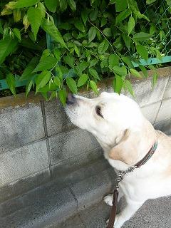 with dog   いつものひととき♪_a0165160_755563.jpg