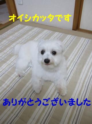 b0193480_22593068.jpg