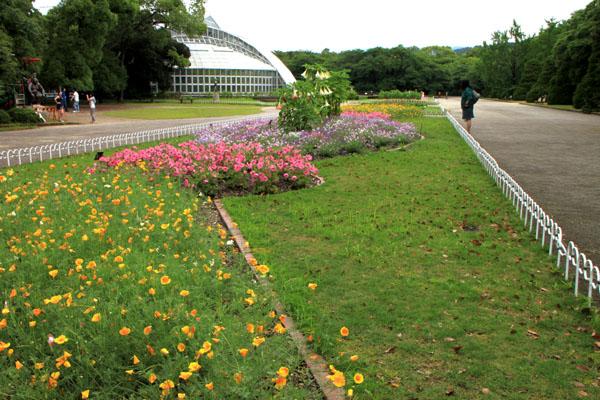 バラが咲いた 府立植物園1_e0048413_20302823.jpg