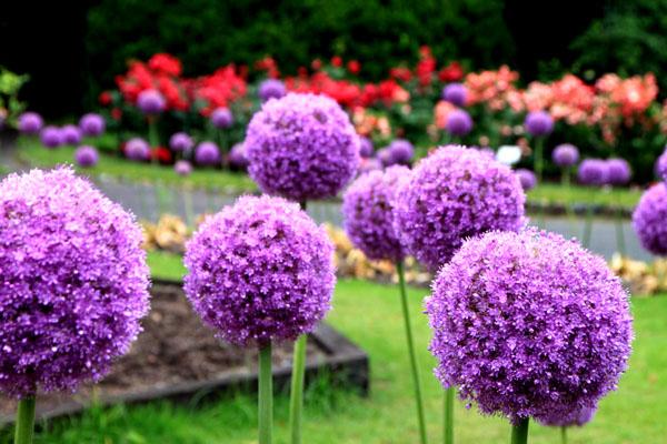 バラが咲いた 府立植物園1_e0048413_20304583.jpg