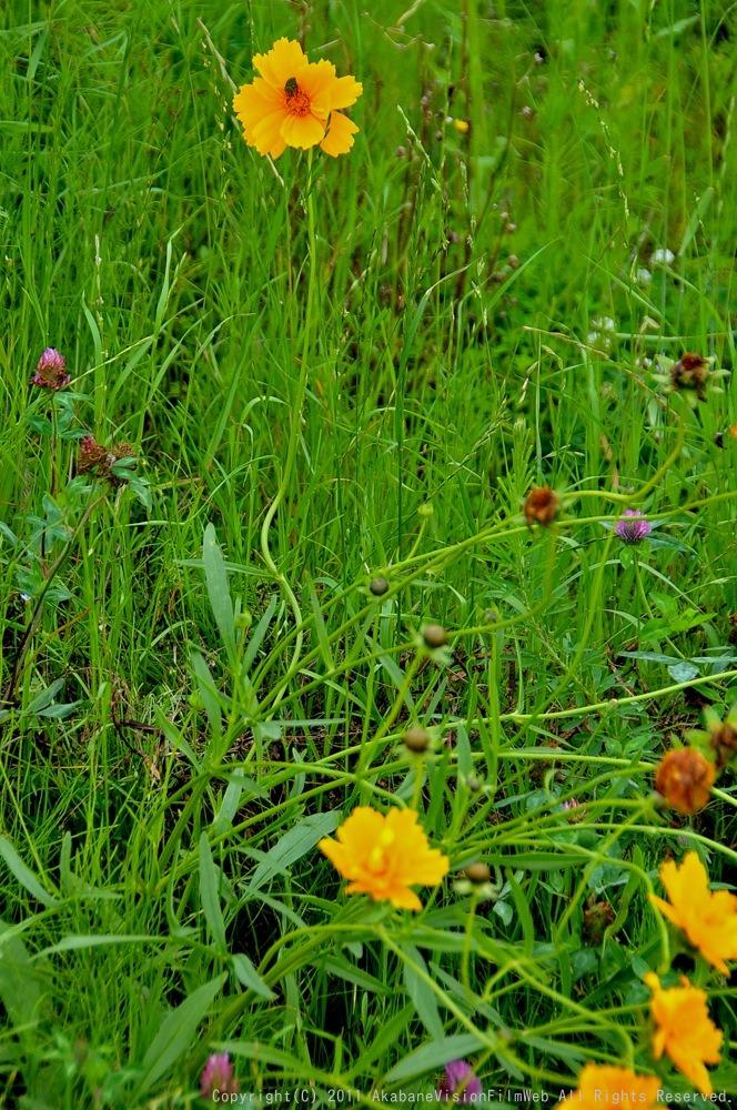 JOSF緑山6月初心者講習会&コース開放日の風景VOL2:スタート練習の風景_b0065730_17113977.jpg