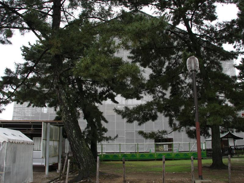 【工事情報】興福寺 本堂の再建工事現状_b0186036_9504312.jpg