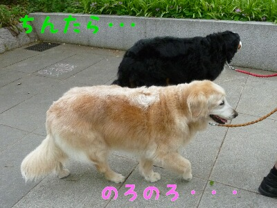 e0044837_18571475.jpg