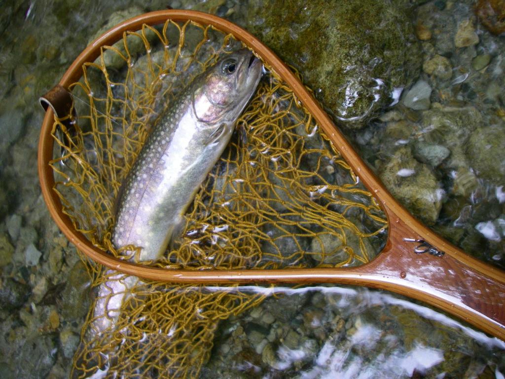 やっと魚の写真が_e0029256_16163357.jpg