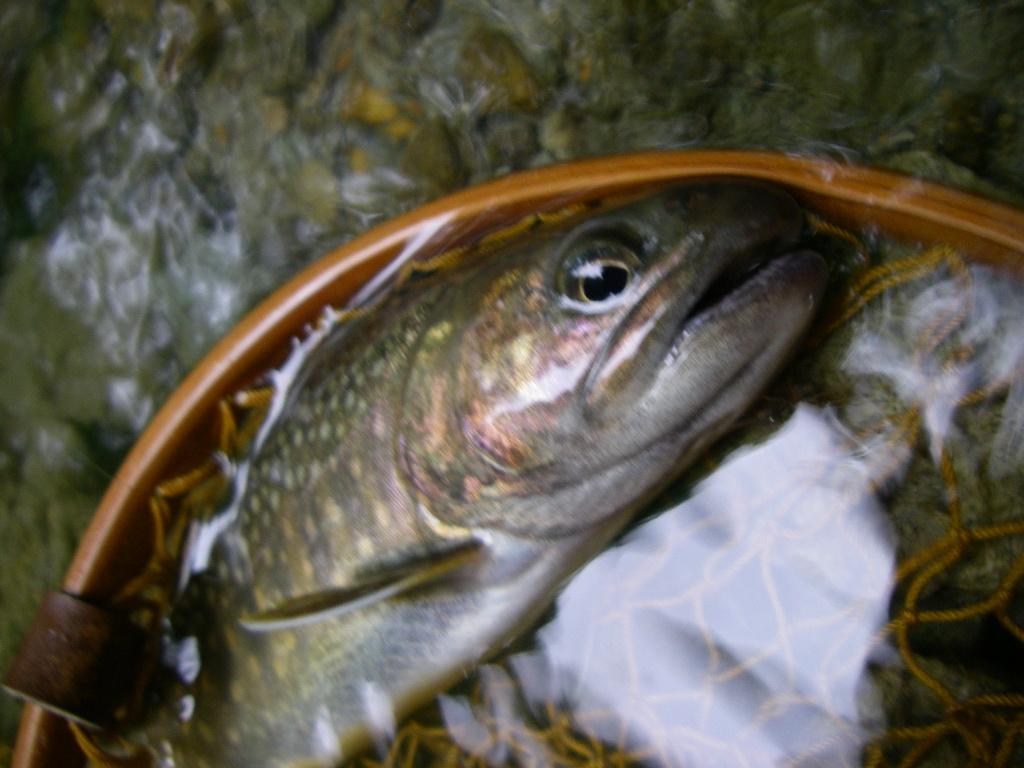 やっと魚の写真が_e0029256_16192743.jpg