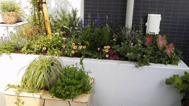 雨間をぬっての花の植え替えもどうにか一段落・・・_b0137969_1949285.jpg