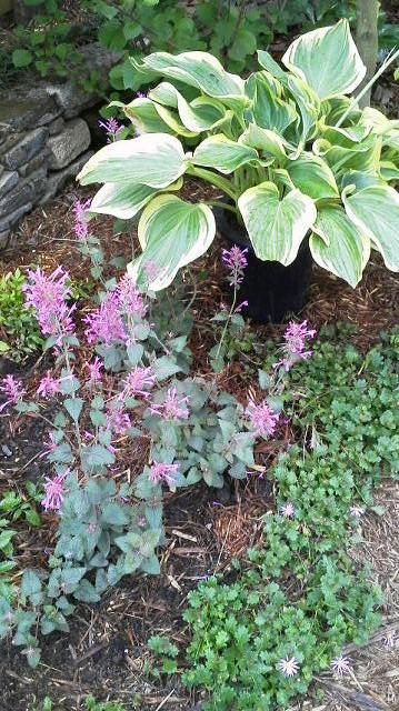 雨間をぬっての花の植え替えもどうにか一段落・・・_b0137969_2021129.jpg