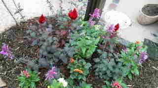 雨間をぬっての花の植え替えもどうにか一段落・・・_b0137969_2021915.jpg