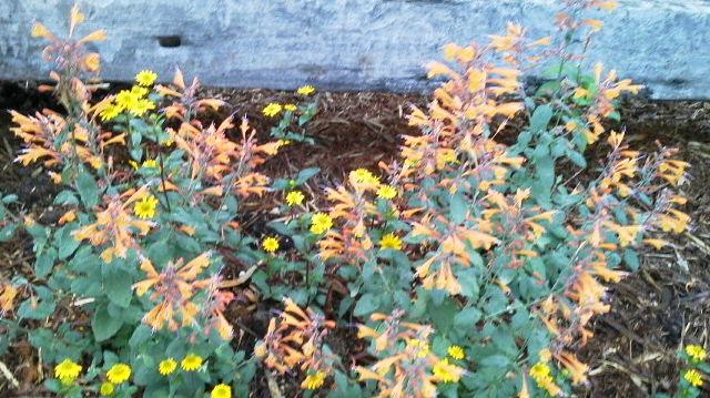雨間をぬっての花の植え替えもどうにか一段落・・・_b0137969_2055499.jpg