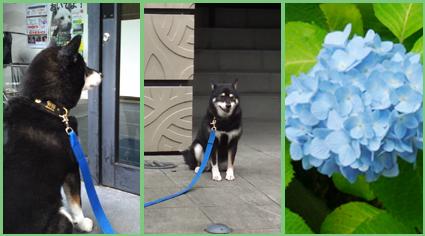 保護犬支援のお知らせ。頑張って!_e0236072_228321.jpg