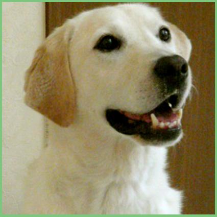 保護犬支援のお知らせ。頑張って!_e0236072_2423994.jpg