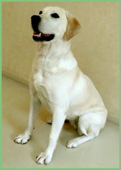保護犬支援のお知らせ。頑張って!_e0236072_2491614.jpg