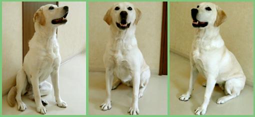 保護犬支援のお知らせ。頑張って!_e0236072_2495677.jpg