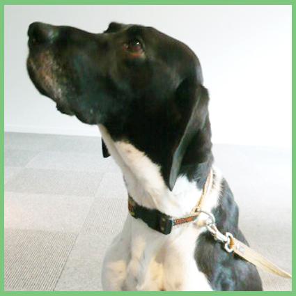 保護犬支援のお知らせ。頑張って!_e0236072_2564129.jpg