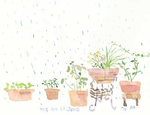 6月の庭 9_d0115092_7273045.jpg