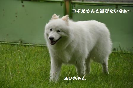f0212597_151076.jpg