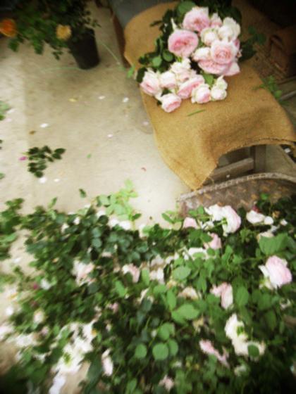6月の庭仕事と花束のお裾分け。_d0077603_5551393.jpg