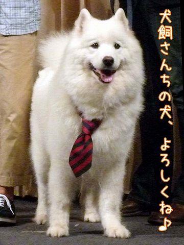 映画 『犬飼さんちの犬』 完成披露試写会_c0062832_6541.jpg