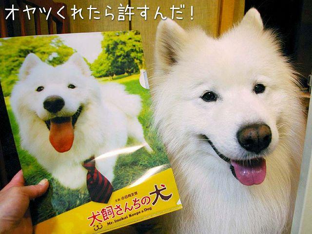映画 『犬飼さんちの犬』 完成披露試写会_c0062832_862328.jpg