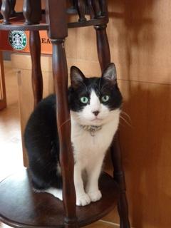 メロメロ猫 空(くぅ)編。_a0143140_2264274.jpg
