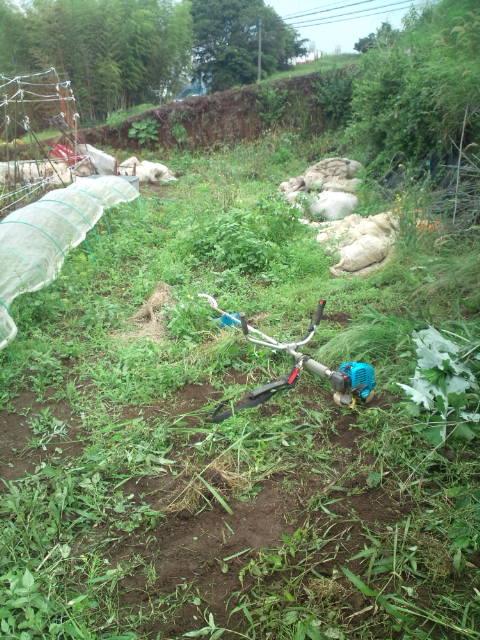 草刈りと畑のメンテナンス_c0222448_10272119.jpg