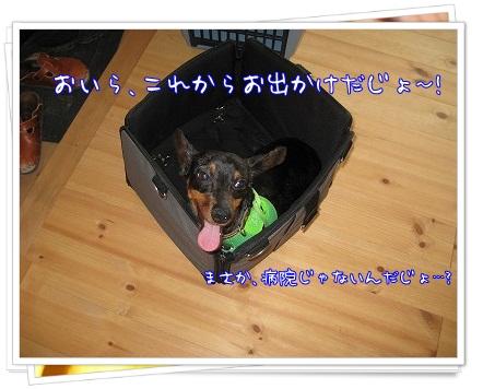 woodygardencafe@阿見町・あみアウトレット近く_a0091865_2218242.jpg