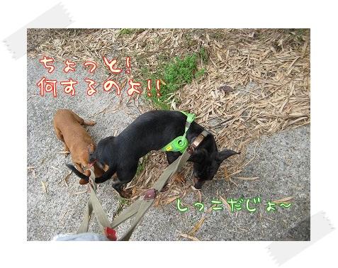 woodygardencafe@阿見町・あみアウトレット近く_a0091865_22212721.jpg