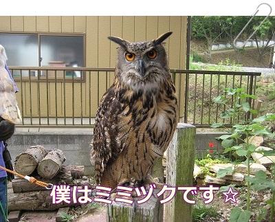 woodygardencafe@阿見町・あみアウトレット近く_a0091865_22225415.jpg