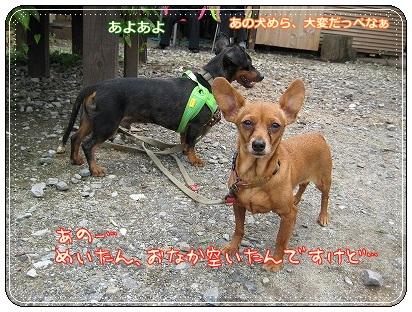woodygardencafe@阿見町・あみアウトレット近く_a0091865_22294139.jpg