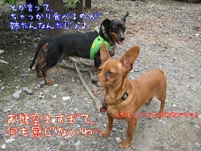 woodygardencafe@阿見町・あみアウトレット近く_a0091865_22302311.jpg