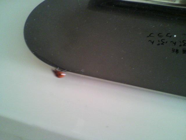てんとう虫がセラピアに_b0106766_2134123.jpg