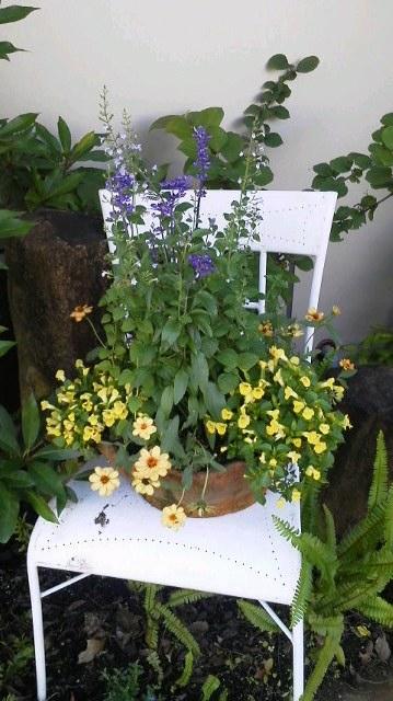 GOROさんのお庭の植栽_b0137969_6281460.jpg