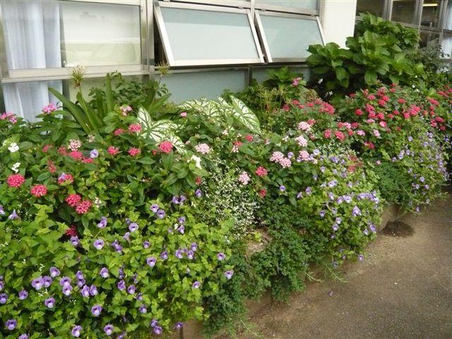 ここにもアガスターチ・・・・・病院のお庭の植栽_b0137969_6385013.jpg