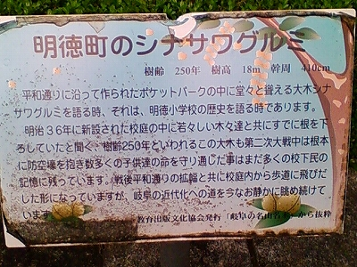 明徳町のシナサワグルミ_e0064783_23163373.jpg
