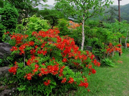 チェリーパークラインの花たち_e0120896_710383.jpg