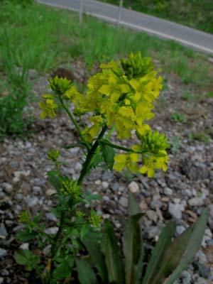 チェリーパークラインの花たち_e0120896_734284.jpg