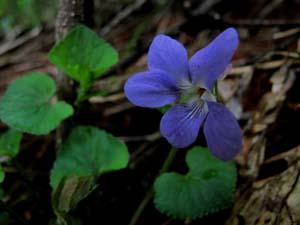 チェリーパークラインの花たち_e0120896_77852.jpg