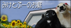 c0128303_0485430.jpg