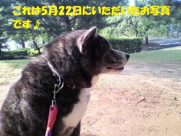 f0121712_15413838.jpg