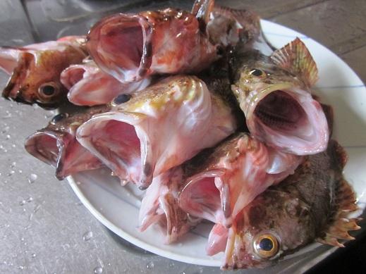 大漁!_f0177714_1041351.jpg