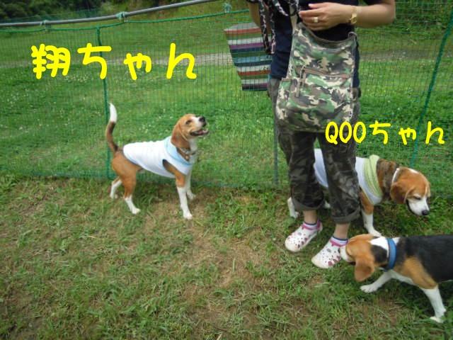 c0166622_1322201.jpg