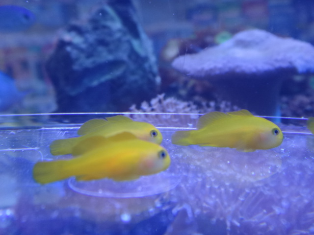 海水魚・サンゴ・水草・淡水魚_f0189122_1323325.jpg