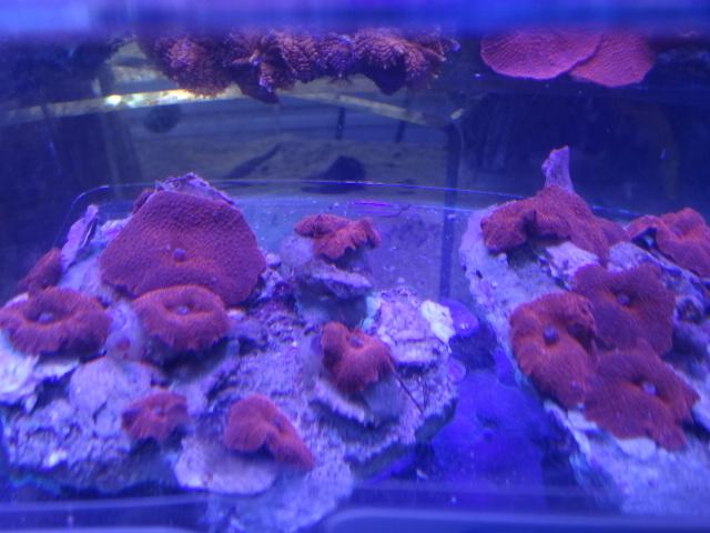 海水魚・サンゴ・水草・淡水魚_f0189122_13243850.jpg